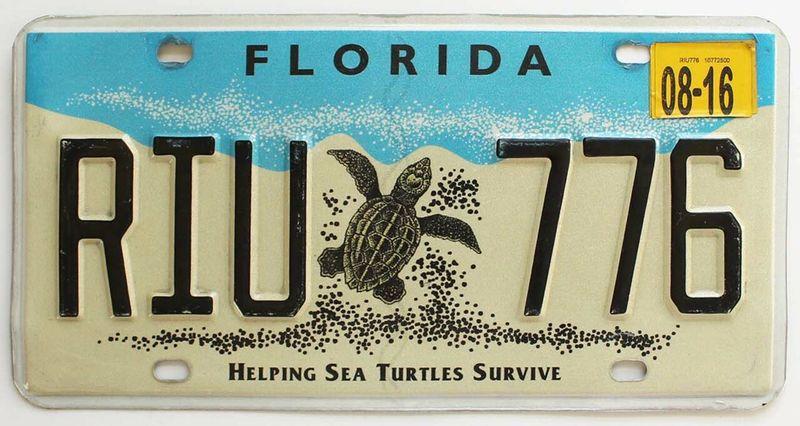Спасём черепах Флориды