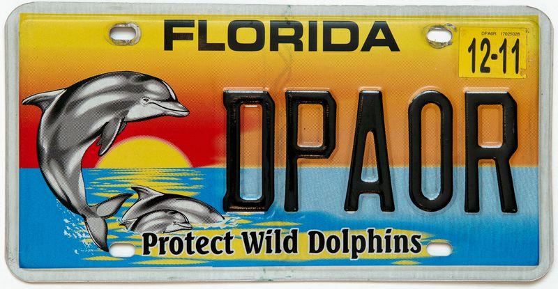 Защитим дикого дельфина